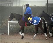 一昨年のジェンティルドンナに続く牝馬Vをにらむミッキークイーン