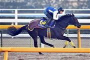 牝馬としては史上初の春秋グランプリ制覇がかかるマリアライト