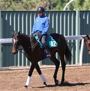 名牝トゥザヴィクトリーの子トゥザフロンティア。来春のクラシックを狙う良血馬が満を持してデビュー戦を迎える