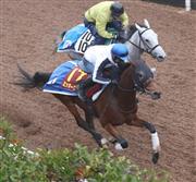 エリザベス女王杯で3着に好走したミッキークイーンは有馬記念を目指す(手前)=2017年11月8日、栗東トレセン