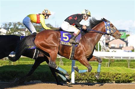 発表 2019 代表 年度 馬 超大物カリフォルニアクロームを日本で繋養へ 14、16年米国年度代表馬―